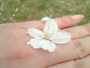 はじまりの桜。