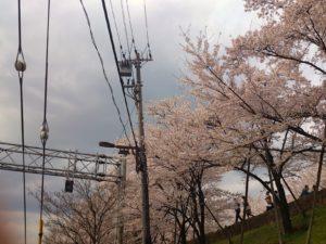 南禅寺・インクラインの桜