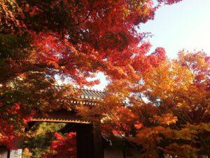 秋のゆるりさんぽ もみじの永観堂禅林寺