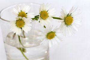 flowers-646644_640