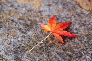 秋のゆるりさんぽ 白川