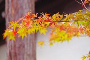 秋のゆるりさんぽ 新京極をぶらり
