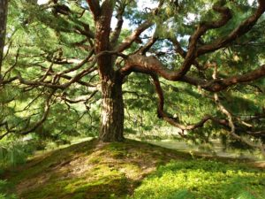 秋のゆるりさんぽ 平安神宮神苑へ